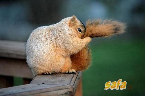 embarrassed-squirrel